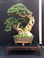 bonsai pot 22