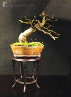 bonsai pot 23