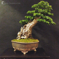 bonsai pot 24