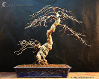 bonsai pot 29