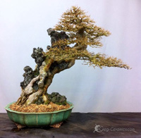 bonsai pot 32