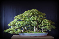 bonsai pot 4