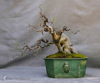 bonsai pot 47