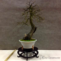 bonsai pot 53