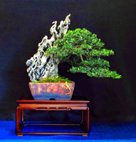 bonsai pot 6