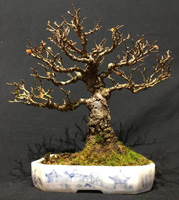 bonsai pot 66